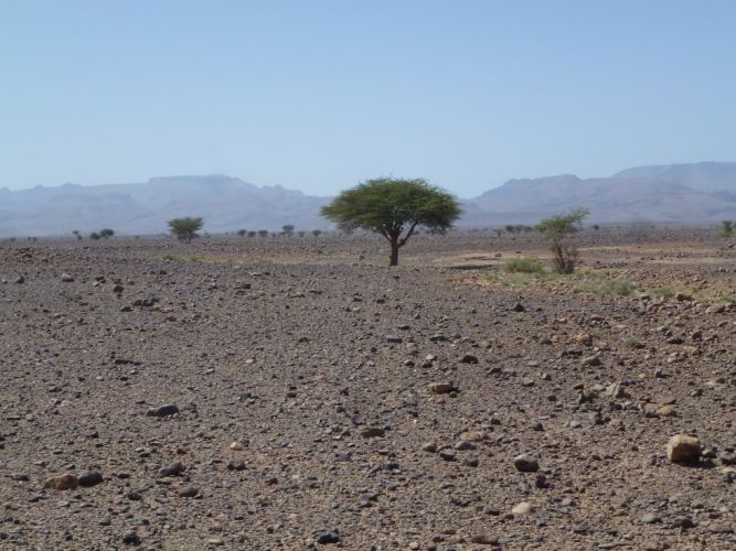 prog désert d(erg et de reg